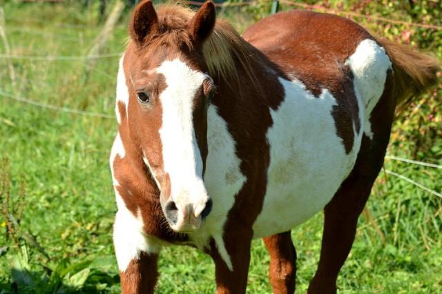 WALANIE (VANILLE) - ONC poney - adoptée en avril 2011 par voulk  - Page 6 10711610
