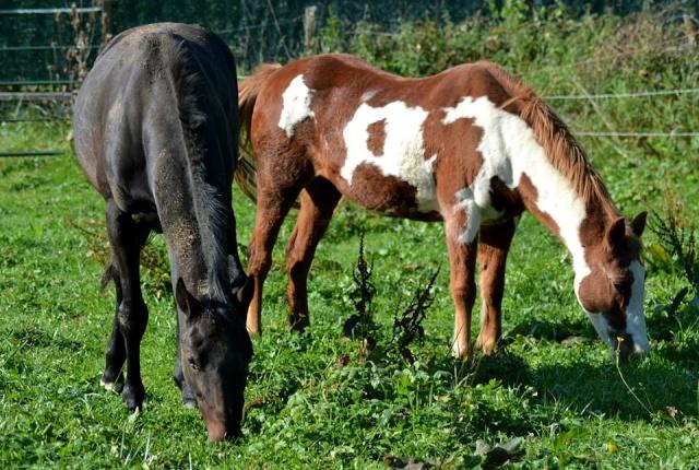 WALANIE (VANILLE) - ONC poney - adoptée en avril 2011 par voulk  - Page 6 10717510