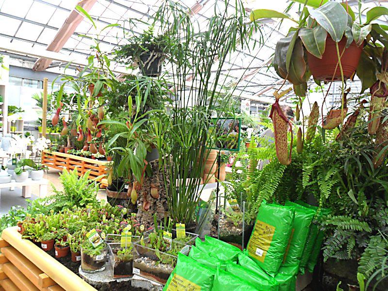 Jardinerie DEHNER à Rastatt (Allemagne) 3_carn10