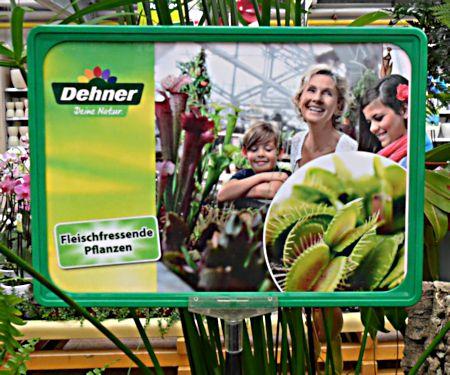 Jardinerie DEHNER à Rastatt (Allemagne) 4a_dio10
