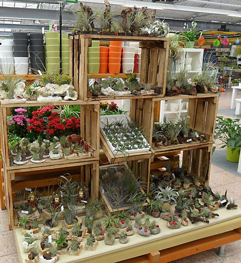 Jardinerie DEHNER à Rastatt (Allemagne) 6_till10