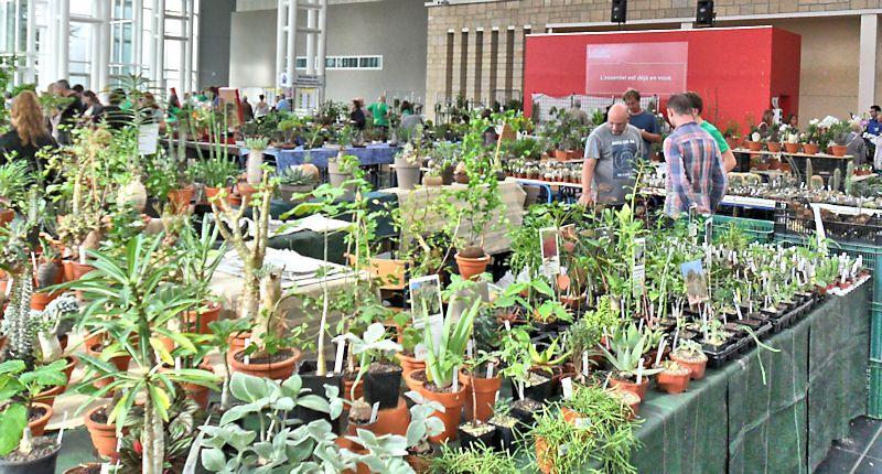 Expo Gardenia : Les journées florales en picardie (60) Beauva11