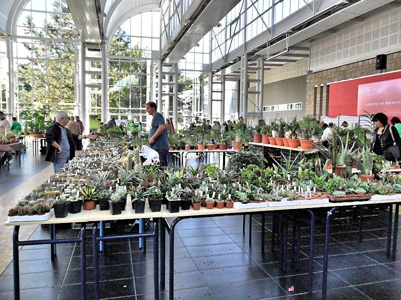 Expo Gardenia : Les journées florales en picardie (60) Beauva12