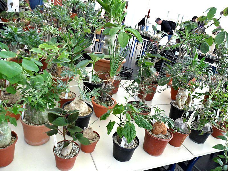 Expo Gardenia : Les journées florales en picardie (60) Beauva13