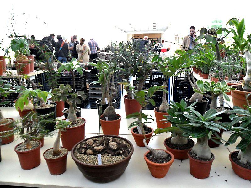 Expo Gardenia : Les journées florales en picardie (60) Beauva14
