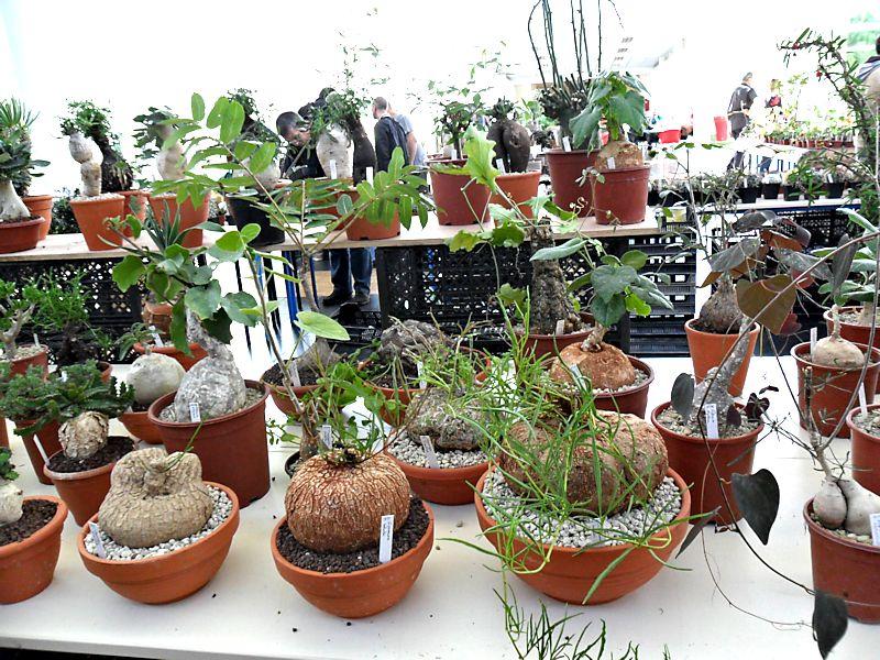 Expo Gardenia : Les journées florales en picardie (60) Beauva15