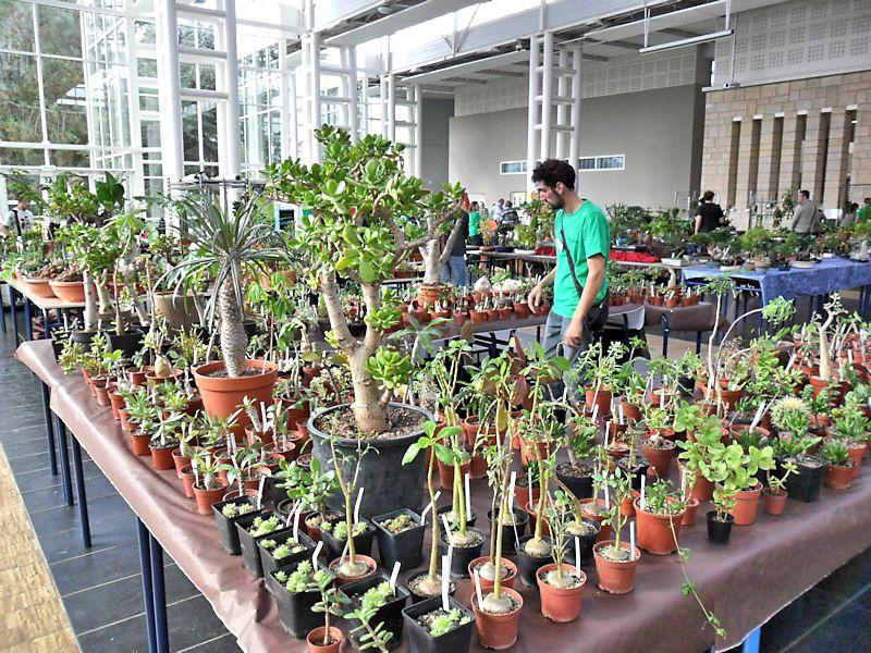Expo Gardenia : Les journées florales en picardie (60) Beauva17