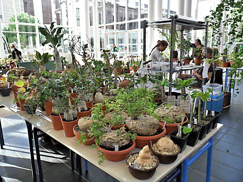 Expo Gardenia : Les journées florales en picardie (60) Beauva18