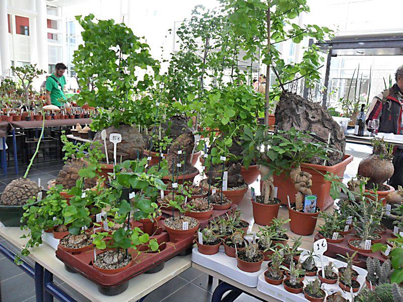 Expo Gardenia : Les journées florales en picardie (60) Beauva19