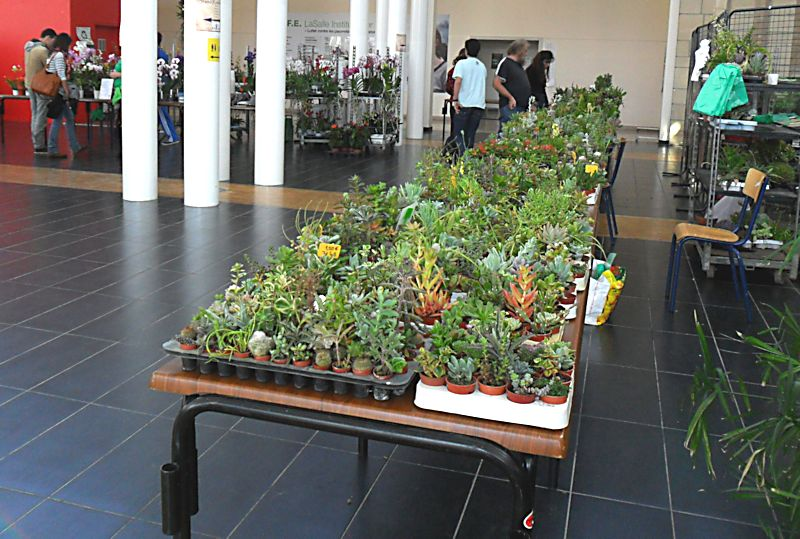 Expo Gardenia : Les journées florales en picardie (60) Beauva20