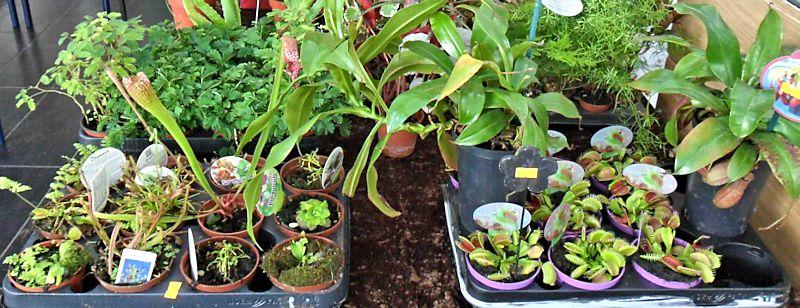 Expo Gardenia : Les journées florales en picardie (60) Beauva21