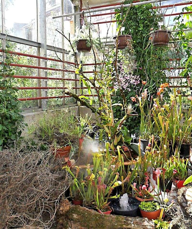 Bourse aux plantes carnivores et atypique 2014- Jardin botanique de Fribourg - Page 2 Fribou10