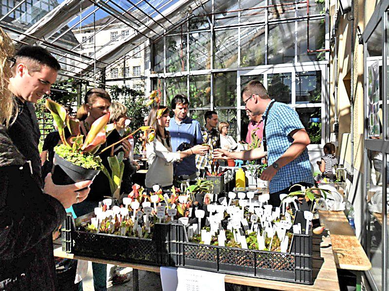 Bourse aux plantes carnivores et atypique 2014- Jardin botanique de Fribourg - Page 2 Fribou14