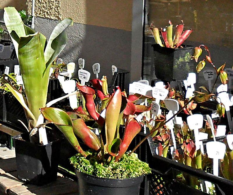 Bourse aux plantes carnivores et atypique 2014- Jardin botanique de Fribourg - Page 2 Fribou22