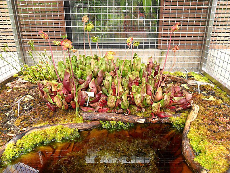 Jardin botanique de Porrentruy (JU) Jb_por10