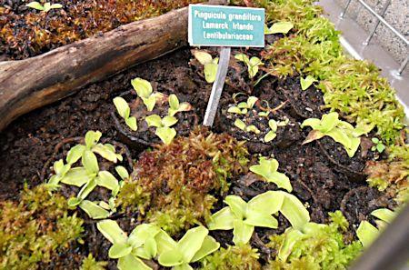 Jardin botanique de Porrentruy (JU) Jb_por11