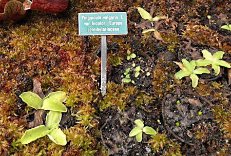Jardin botanique de Porrentruy (JU) Jb_por12