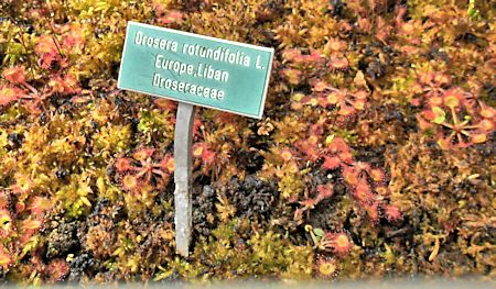 Jardin botanique de Porrentruy (JU) Jb_por13