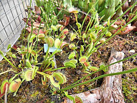 Jardin botanique de Porrentruy (JU) Jb_por15