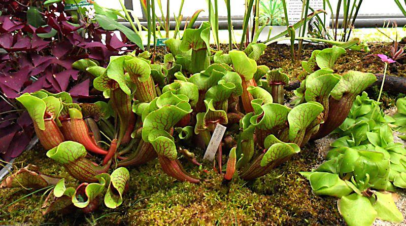 Jardin botanique de Porrentruy (JU) Jb_por18