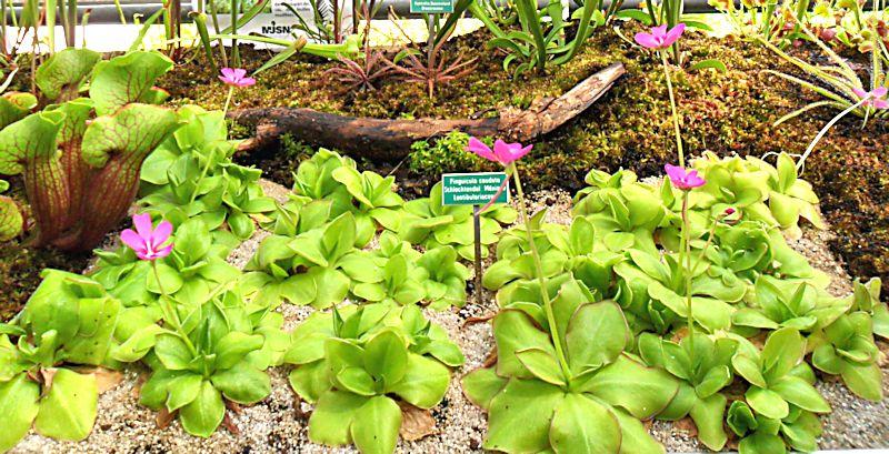 Jardin botanique de Porrentruy (JU) Jb_por19