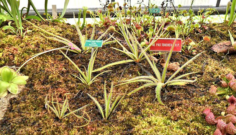 Jardin botanique de Porrentruy (JU) Jb_por20