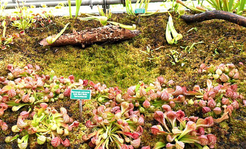 Jardin botanique de Porrentruy (JU) Jb_por21