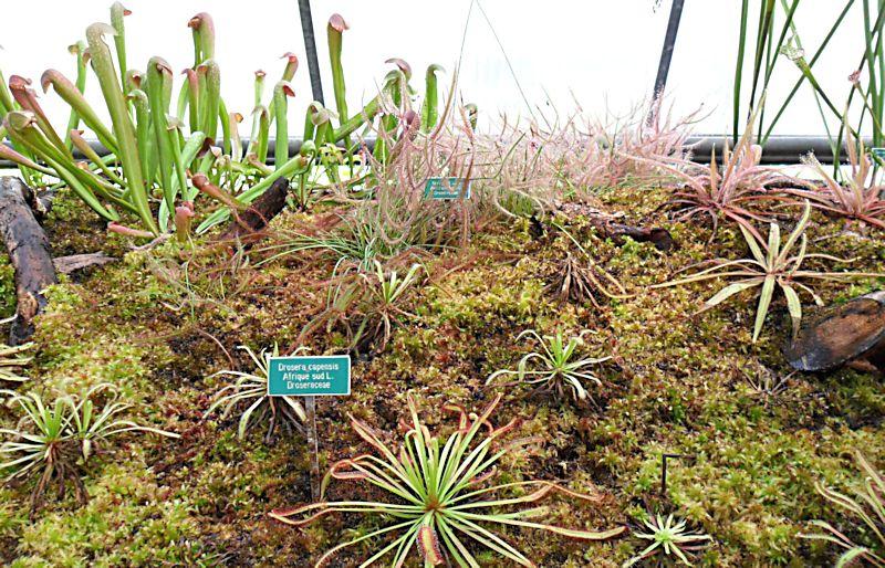 Jardin botanique de Porrentruy (JU) Jb_por22