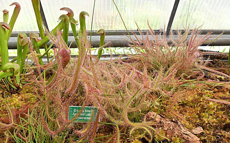 Jardin botanique de Porrentruy (JU) Jb_por23