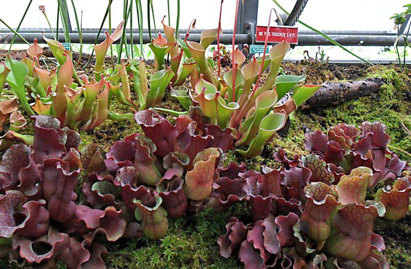 Jardin botanique de Porrentruy (JU) Jb_por24