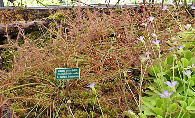 Jardin botanique de Porrentruy (JU) Jb_por25