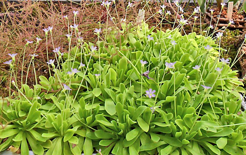 Jardin botanique de Porrentruy (JU) Jb_por26