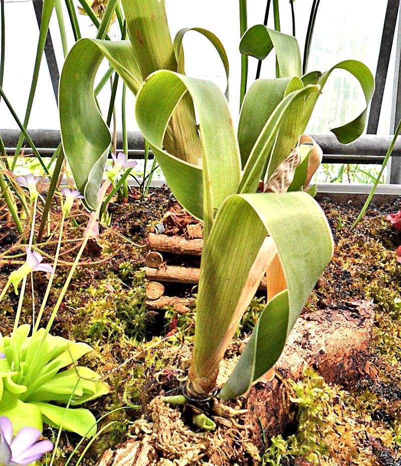Jardin botanique de Porrentruy (JU) Jb_por27