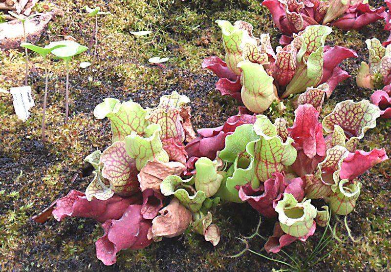 Jardin botanique de Porrentruy (JU) Jb_por28
