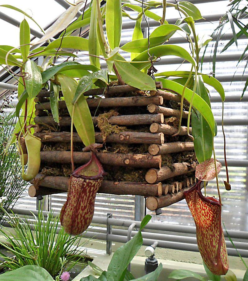 Jardin botanique de Porrentruy (JU) Jb_por30