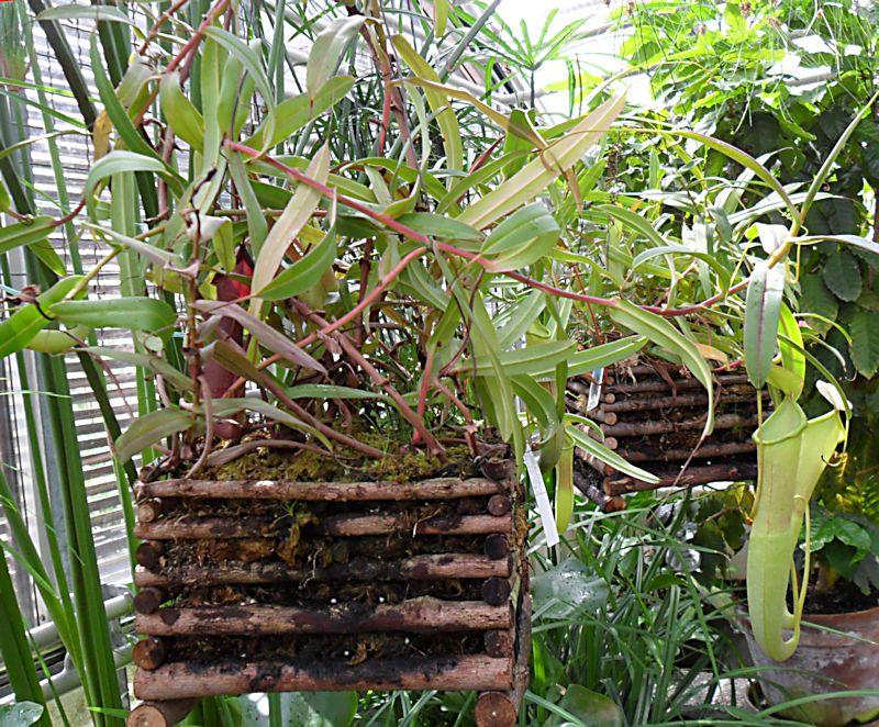 Jardin botanique de Porrentruy (JU) Jb_por31