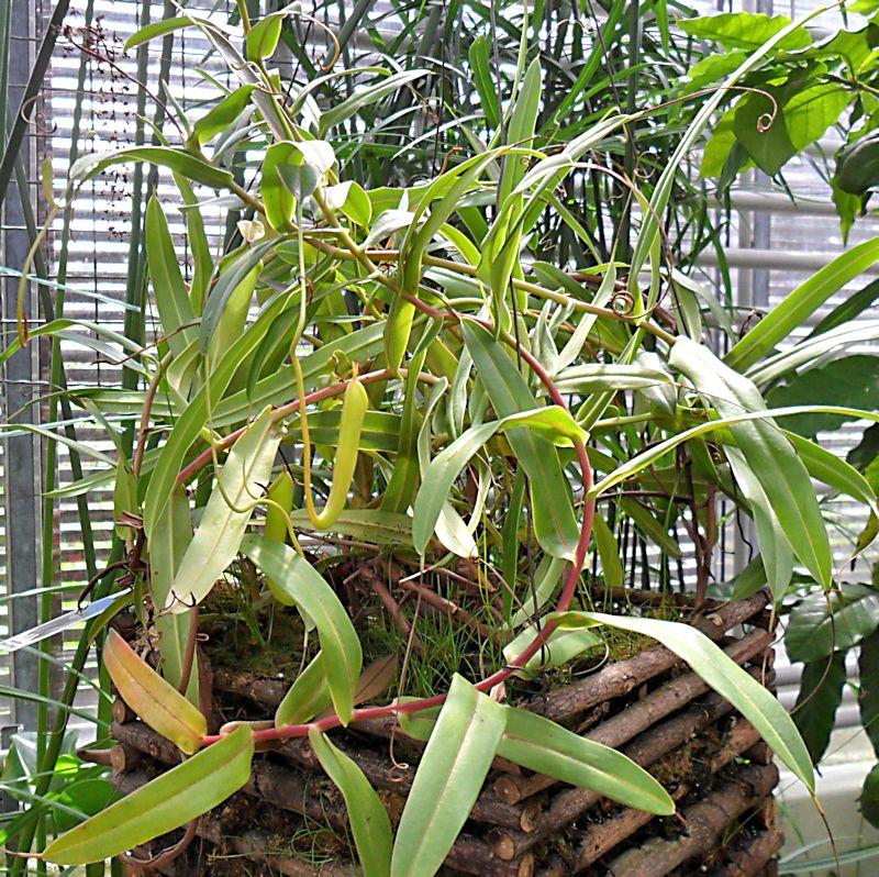 Jardin botanique de Porrentruy (JU) Jb_por32
