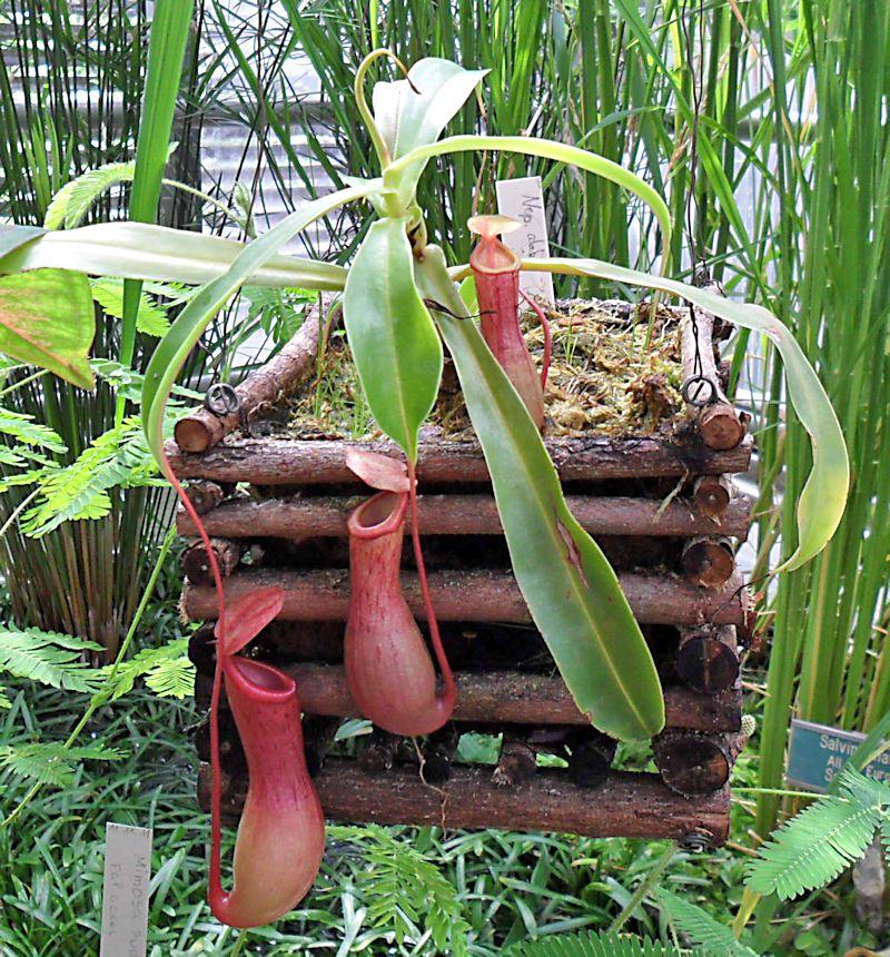 Jardin botanique de Porrentruy (JU) Jb_por34