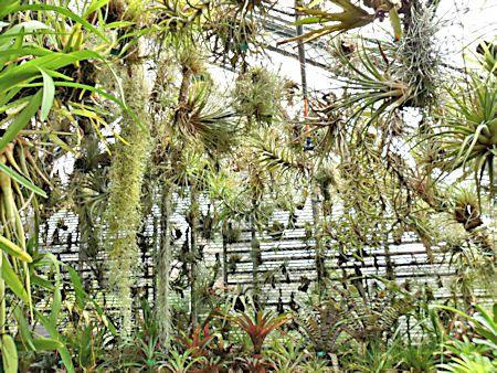 Jardin botanique de Porrentruy (JU) Jb_por38
