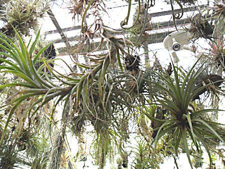 Jardin botanique de Porrentruy (JU) Jb_por39