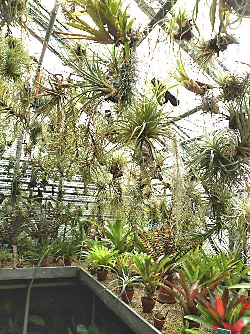 Jardin botanique de Porrentruy (JU) Jb_por41