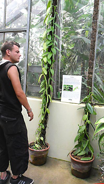 Jardin botanique de Porrentruy (JU) Jb_por42