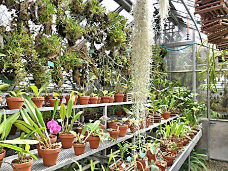 Jardin botanique de Porrentruy (JU) Jb_por43