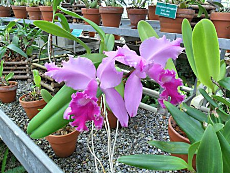 Jardin botanique de Porrentruy (JU) Jb_por44