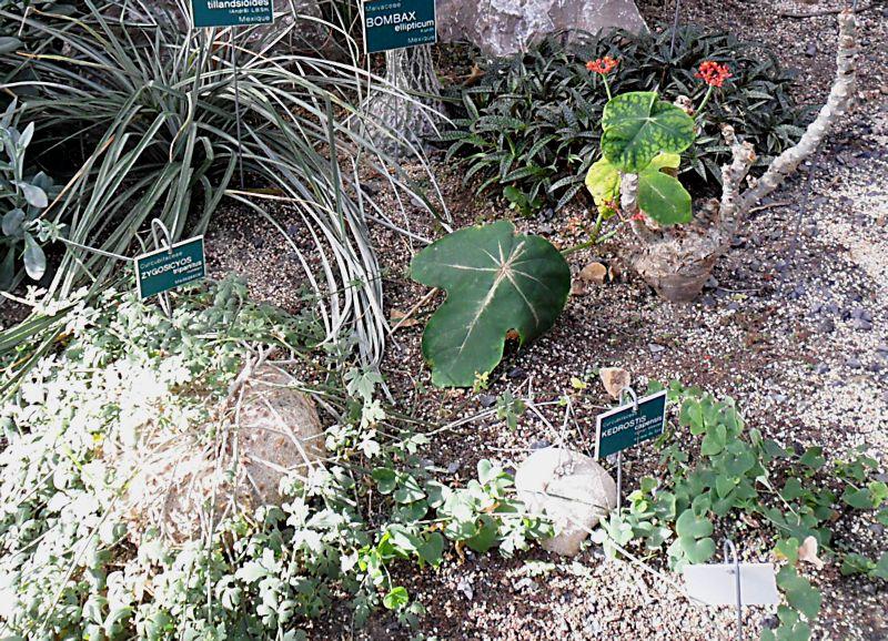 Jardin botanique de Tourcoing (59) Jb_tou10