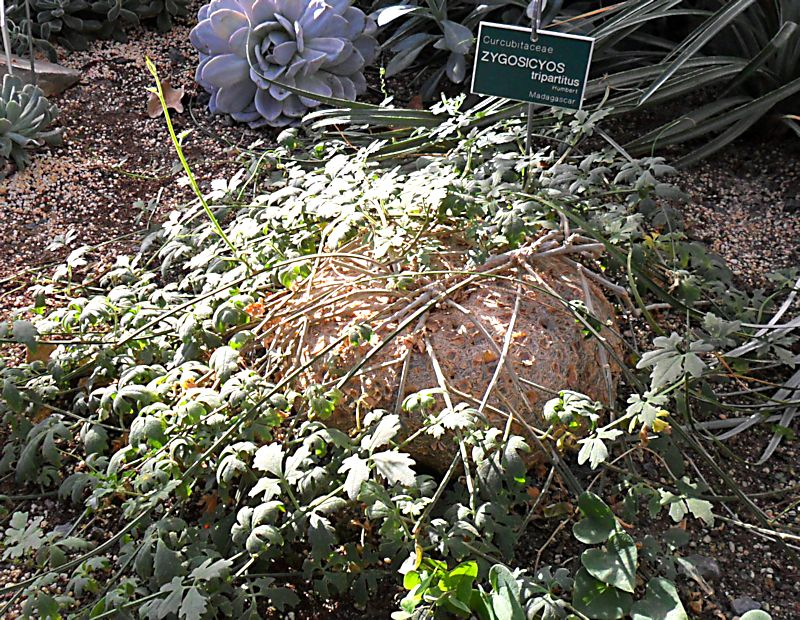 Jardin botanique de Tourcoing (59) Jb_tou11
