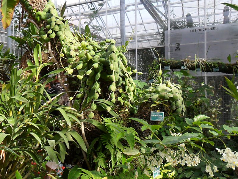 Jardin botanique de Tourcoing (59) Jb_tou18
