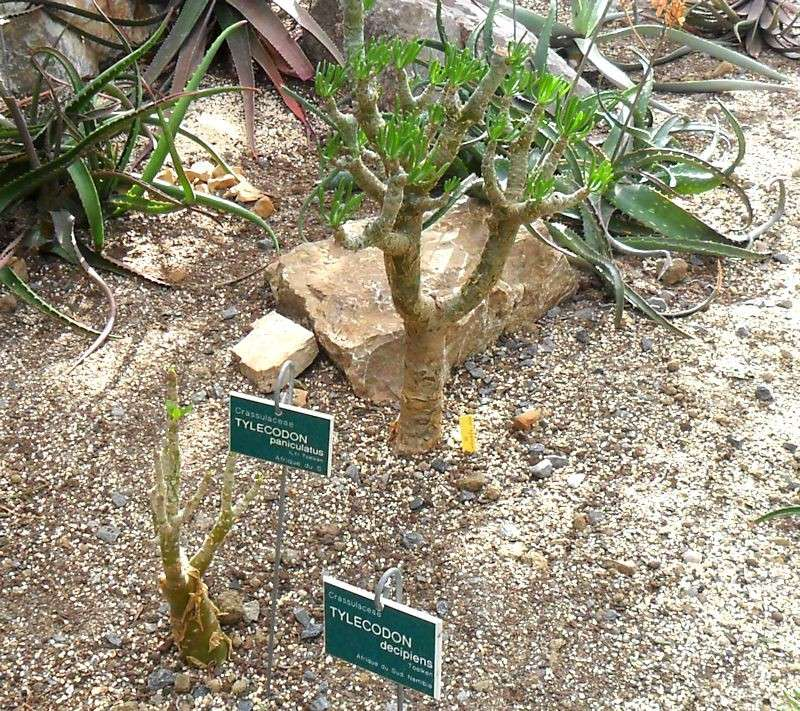 Jardin botanique de Tourcoing (59) Jb_tou23