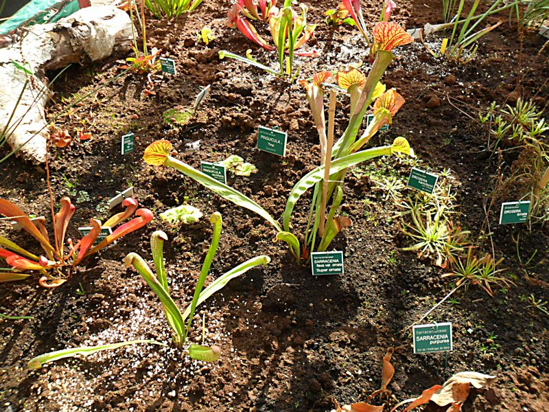 Jardin botanique de Tourcoing (59) Jb_tou29