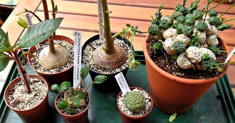 Expo Gardenia : Les journées florales en picardie (60) Mes_ac11
